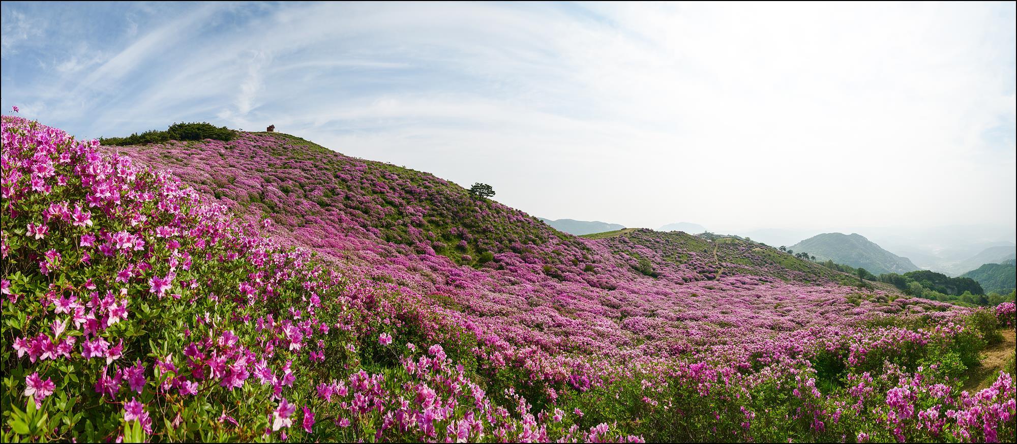DSC_3540 Panorama.jpg